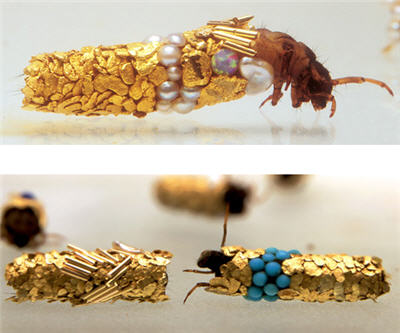 bug gold caddis fly larvae