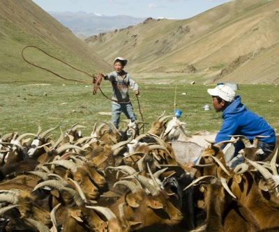 Mongolia sees return to 17% growth next year