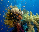 mining-and-other-human-activities-hurting-coral-reefs-causing-sea-life-extinction