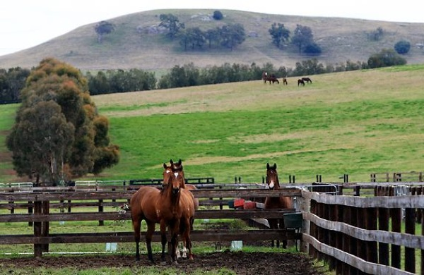 Anglo American, horse breeders fight over mine expansion