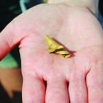 English schoolboys dig up rare 4,300-year-old gold hair ornament