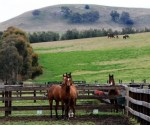 Horse breeders win coal mine expansion fight against Anglo