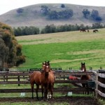 Horse breeders win coal mine expansion fight against Anglo American