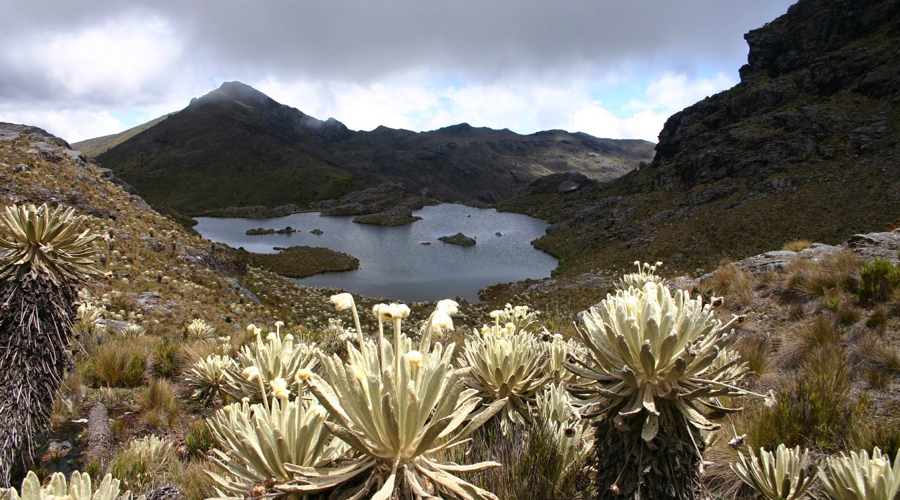 Colombia bans mining in country's vast alpine tundra