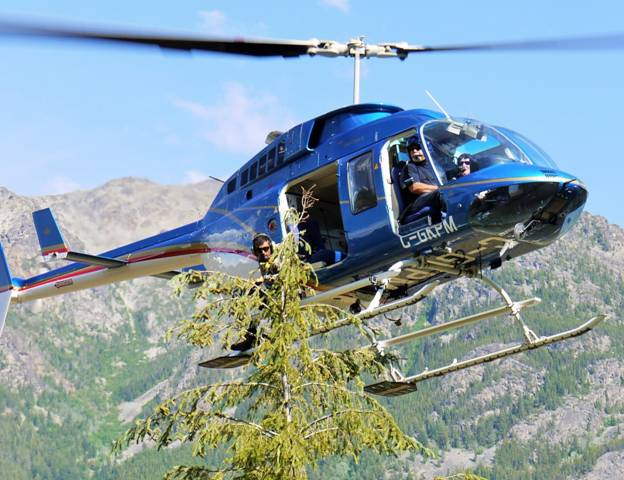 Helicopter supported treetop sampling is an effective way of quickly acquiring samples over large inaccessible areas of B.C.