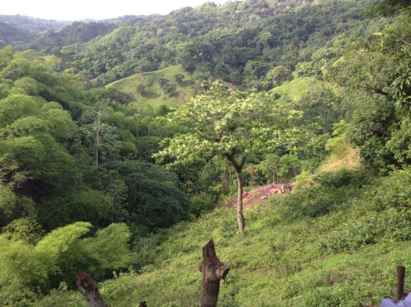 Palisade mine Tour IV - Jamaican forest scene2