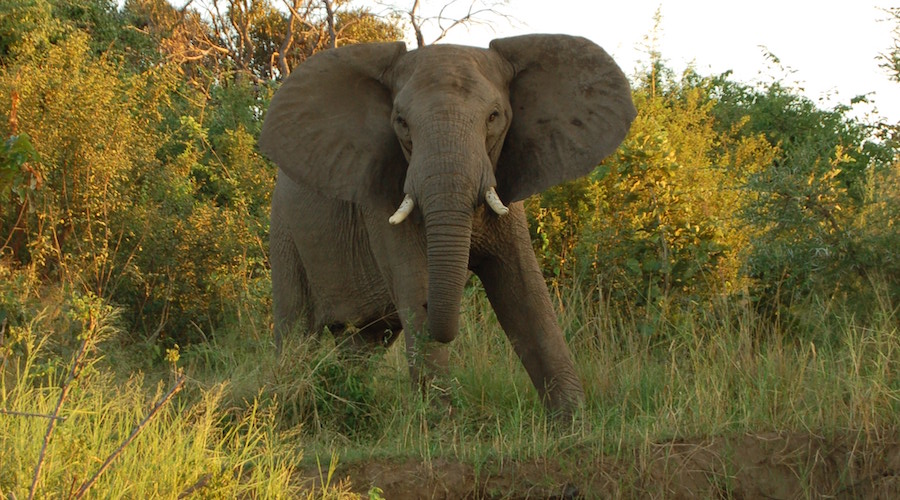 Copper project in Zambian national park could potentially go ahead