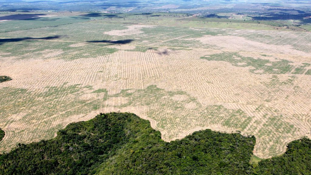 "Deforestation in Brazil's Amazon hits ""highest level in a decade"""