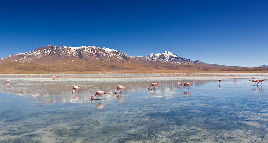 Chile settles dispute with Albemarle over lithium reserves data