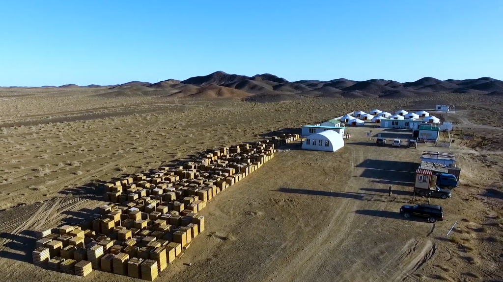 Erdene shares up on new discovery in Mongolia