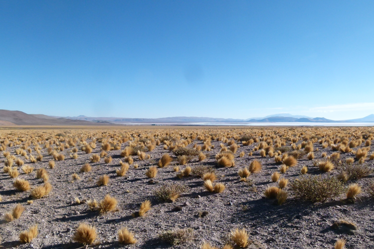 Livent results top expectations as lithium demand begins to rebound